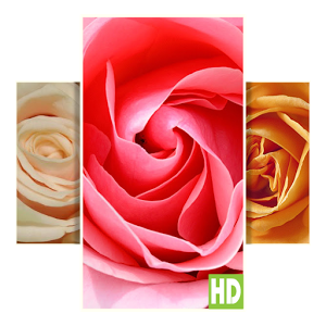 Rose HD Wallpapers