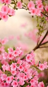 Spring Flowers Live Wallpaper HQ