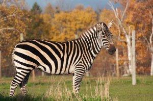 Farm Zoo: Звериная Ферма в Веселом Городе Животных