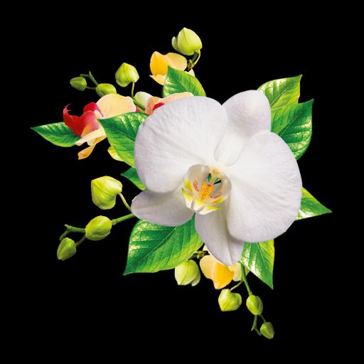 Орхидеи Живые Обои